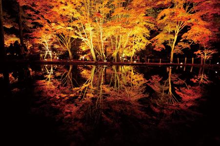 岐阜の紅葉を!曽木公園逆さもみじ ライトアップを巡る