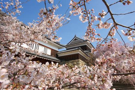 《信州3つの桜吹雪》コヒガンザクラと桜咲く上田城址