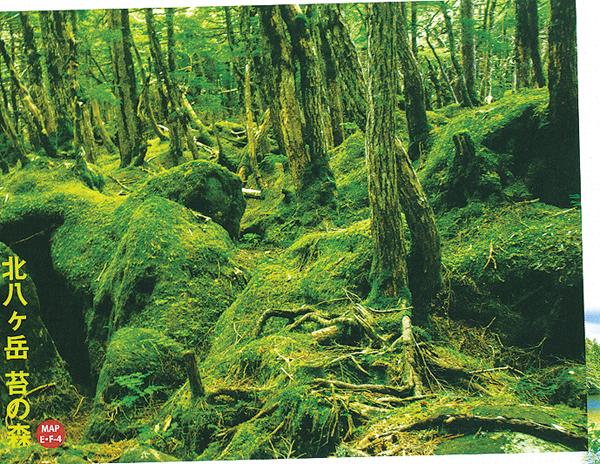 【7月出発】日本一の苔の森ハイキングと白駒の池・御射鹿池を訪ねる旅