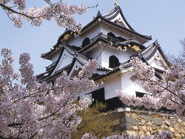 25名様限定!彦根城と贅沢ステーキランチにいちご狩り食べ放題