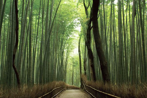 嵐山 〜紅葉めぐり/世界遺産 「天龍寺」と竹林の道を満喫〜
