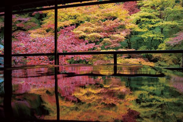 【限定24名】秋の京都御所と瑠璃光院と贅沢ランチの旅