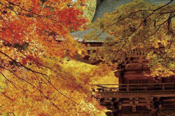 自然・原風景・伝統文化・食文化を楽しむ水戸岡鋭治氏デザインで行く!観光列車『ながら』と紅葉の大矢田もみじ谷