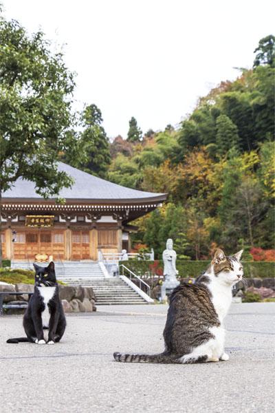 猫と龍の御朱印GET in 福井