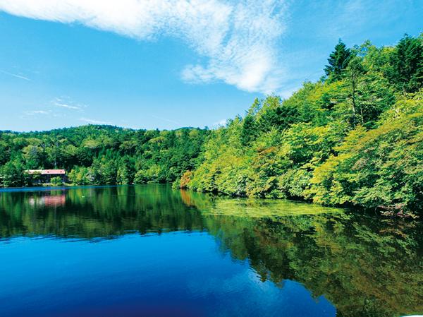 """【苔シリーズ第3弾】バラクライングリッシュガーデンと日本一の苔の森""""白駒の池""""を訪ねる"""