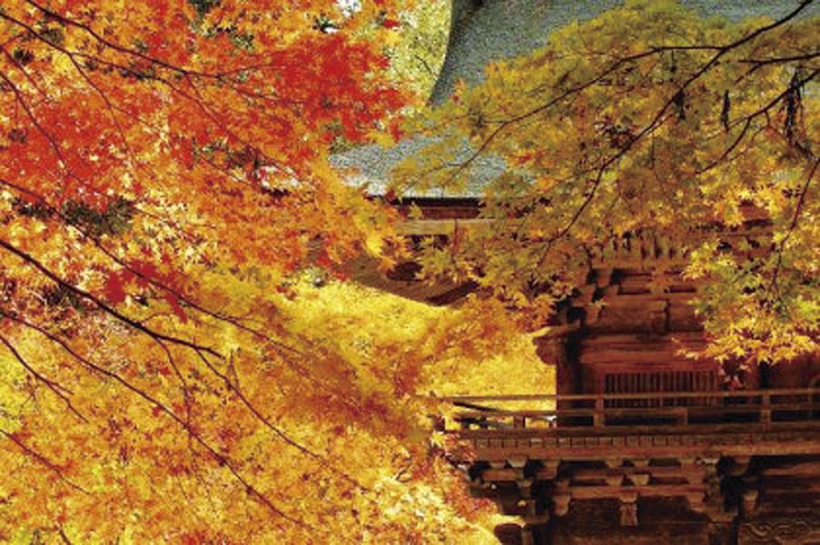 「大矢田神社もみじ谷」散策と長良川 鉄道「ながら」乗車と 郡上八幡