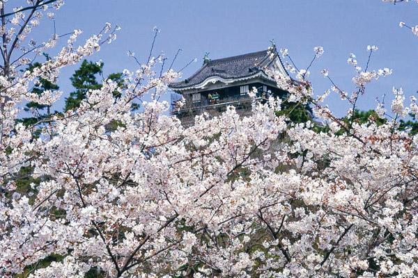 東海の桜を巡る旅
